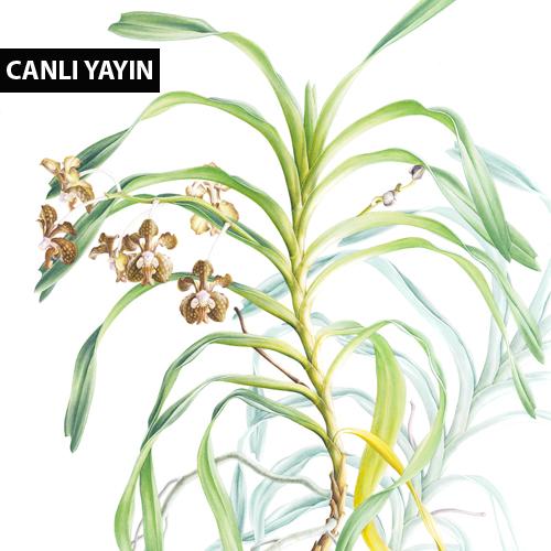 Doğanın İnceliklerini Görmek: Bitki Ressamlığı