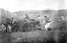 İşçiler sığırların yardımıyla kazıda çıkarılan büyük taş blokları taşımaya çalışıyorlar (1907)
