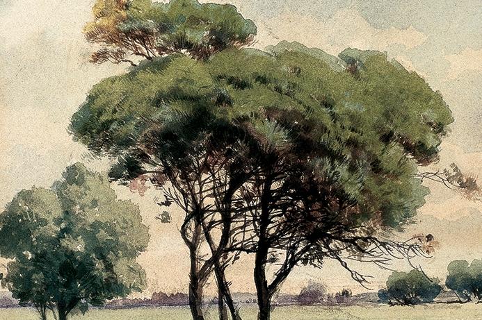 Stone Pine, 25x17.5 cm, watercolour on card, Yapı Kredi Painting Collection