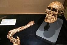 Lidya-Pers savaşına katılmış, 20'li yaşlardaki bir Lidya askerinin Sardeis'te bulunmuş iskeleti