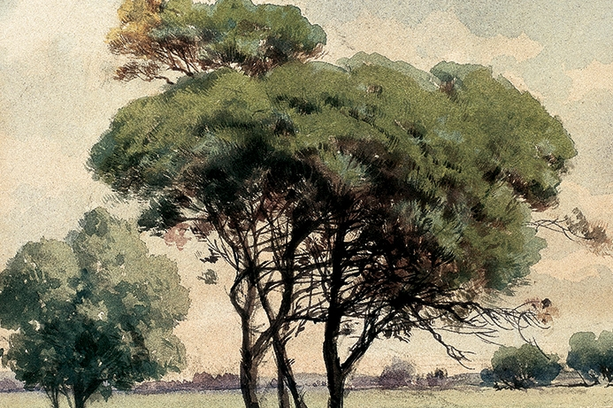Stone Pine, 25x17.5 cm, watercolour on card, Yapı Kredi Painting Collection
